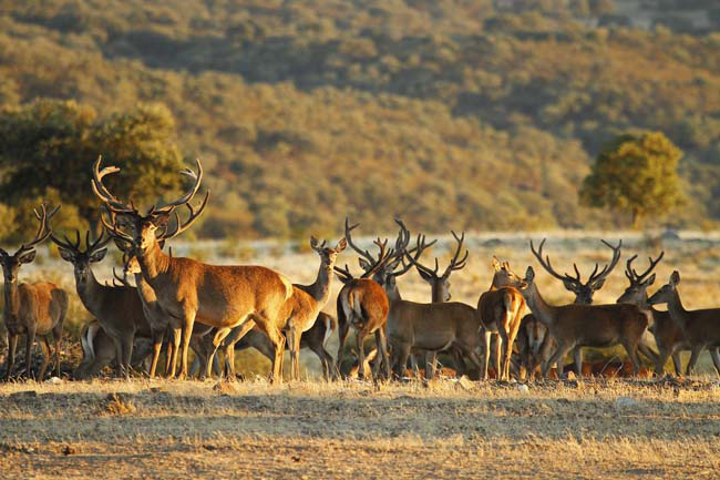 Cotos de Caza en Extremadura