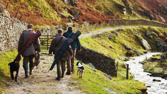 Perros de caza de jabali: conoce a los mejores y más preparados