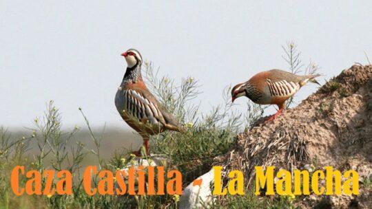 Caza Castilla- La Mancha: los mejores sitios
