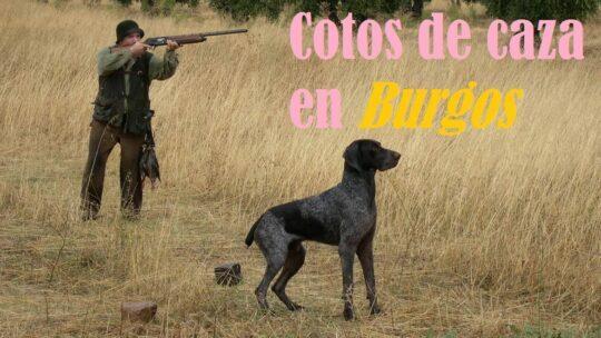 Cotos de caza en Burgos: ¿Dónde cazar?